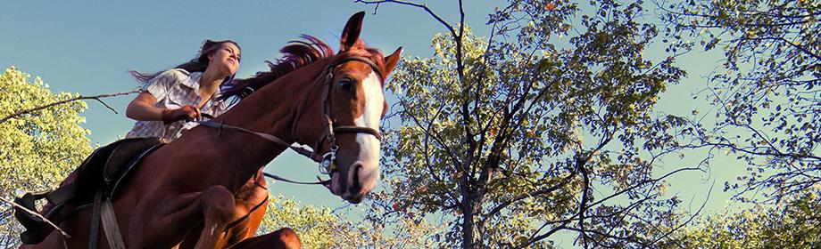 attractions_horsebackriding